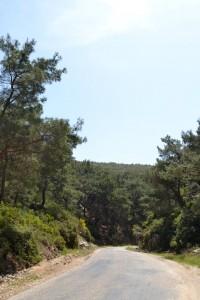 Zeytineli, köy yolu