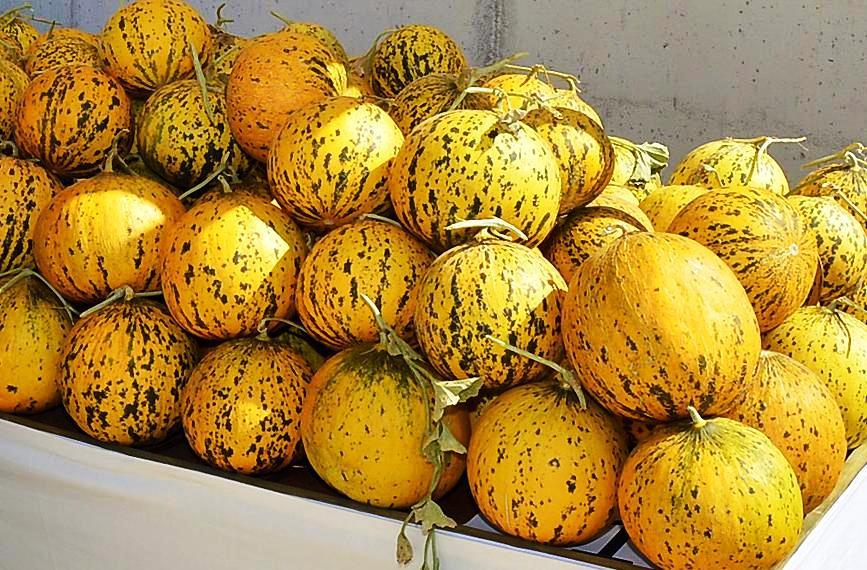 Zeytineli - Çeşme Kavunu